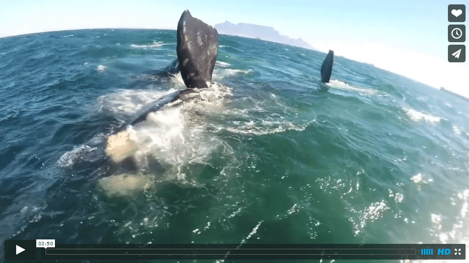 [:en]Sam Light Kiteboarding with Whales![:]