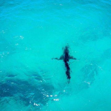 [:es]Viajando con Isa - Kite trip en Australia[:en]Traveling With Isa - Road Trip in Australia #1 [:] 2